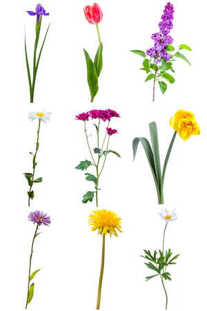 Different beautiful flowers isolated on white background photo