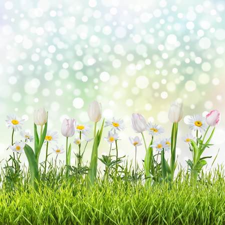 nature wallpaper: Lovely spring background with flowers and grass Stock Photo