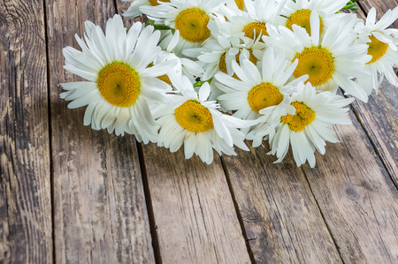 chamomile flower: Chamomile flower in rustic style