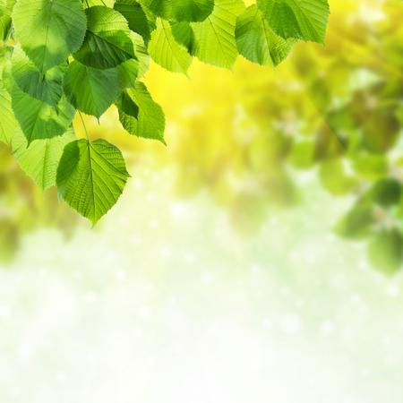 葉と、緑の自然の背景