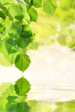 Green nature background with leaves Фото со стока - 34796267