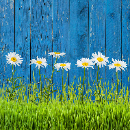 Spring grass and flowers on a fence