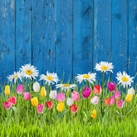 Spring grass and flowers on a fence photo
