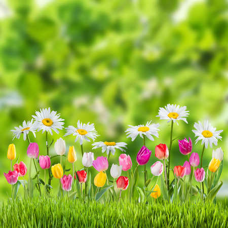 Green spring background with flowers