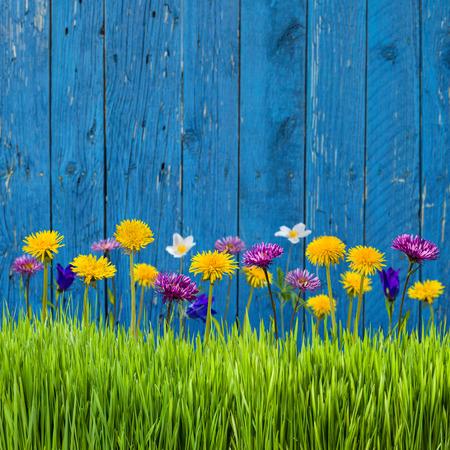春の草と柵の上の花 写真素材