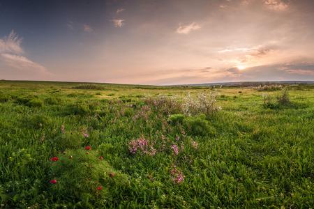 Weide van de lente met bloemen op zonsondergang