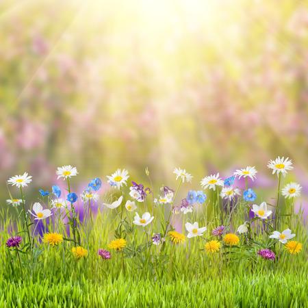 野生の花の美しい春花草原 写真素材