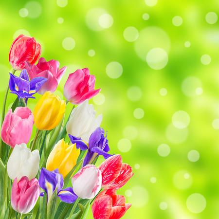 美しい花と春の背景 写真素材