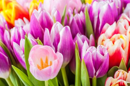 selective focus: Beautiful bouquet tulip, selective focus Stock Photo