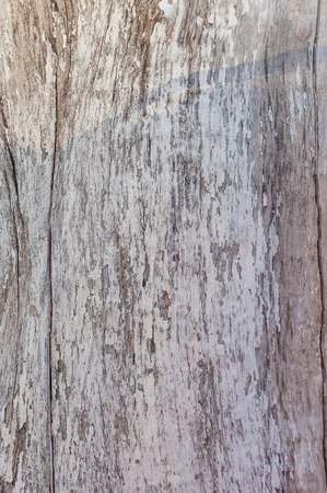 Texture of old wood, background for design Фото со стока