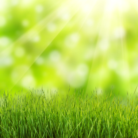 Spring background with green grass Фото со стока - 37433324