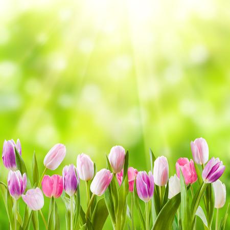 日当たりの良い花、自然の背景を春の牧草地