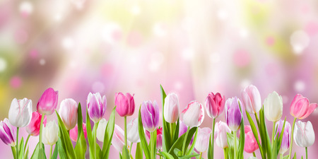 primavera: Primavera prado con flores soleadas, la naturaleza de fondo