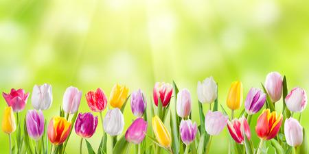 日当たりの良い花、自然の背景と春の牧草地