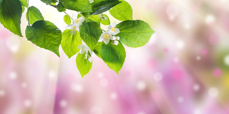 garden of eden: Green nature background with flowers on branch Stock Photo