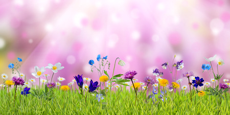 april flowers: Spring meadow with sunny wild flowers, nature background
