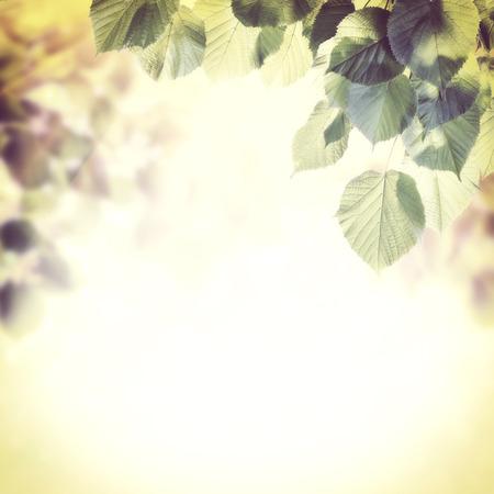 葉とビンテージ緑背景