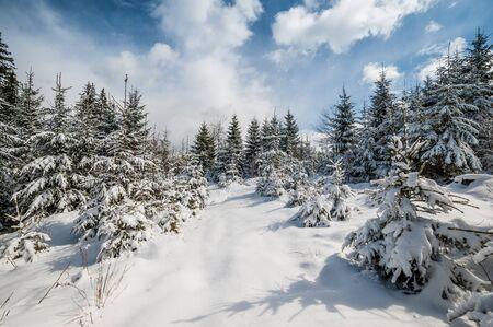 arbre paysage: For�t d'hiver Majestic avec bel arbre, paysage