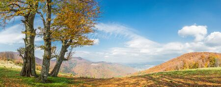 red oak tree: Autumn landscape with golden tree in mountain, panorama Stock Photo