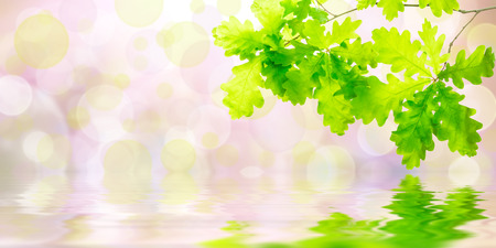 Nature green summer background with oak branch Imagens - 40439286