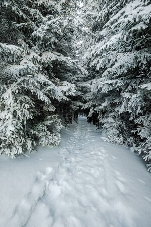 fairy  tail: Footpath in snowbound forest, winter fairy tail
