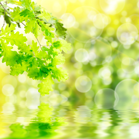 Nature green summer background with oak branch 免版税图像