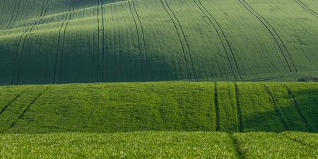 Grün Sommer Landschaft mit Feldern auf Hügeln Standard-Bild - 41034967