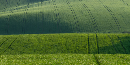 Green summer landscape with fields on hills