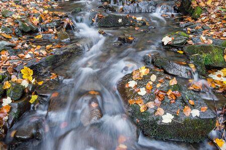 autmn: Beautiful autmn landcape with river in majestic forest Stock Photo