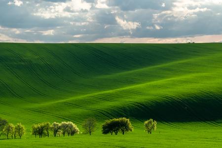 Zielone wzgórza w promieniach wieczornego słońca, krajobraz rolniczy