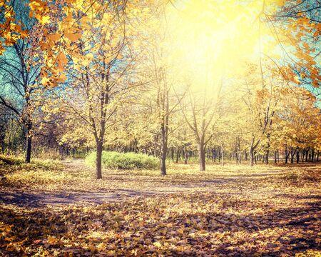 vintagel: Amazing vintagel autumn parkland with maples alley
