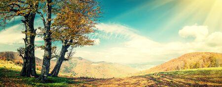 arbol roble: paisaje de otoño de la vendimia con el árbol de oro en la montaña, panorama Foto de archivo