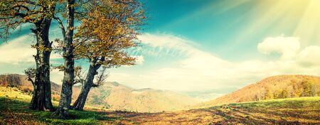red oak tree: Vintage autumn landscape with golden tree in mountain, panorama