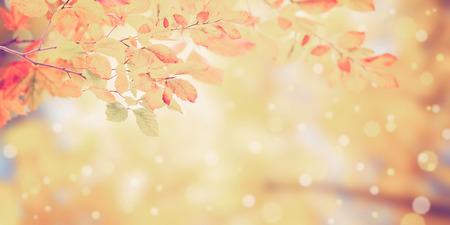 黄金色の葉を持つ、自然ヴィンテージ秋の背景