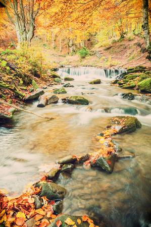 vintagel: Vintagel autumn landscape with river in golden forest Stock Photo
