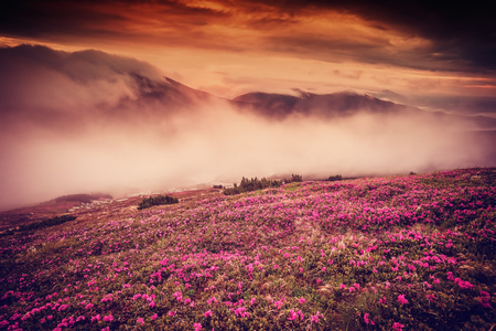 majestic: Landscape with flowers in mountain and majestic sky on morning, vintage picture