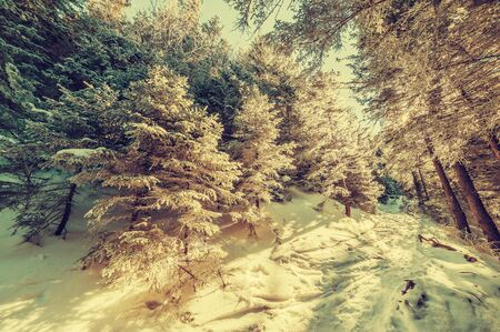 fairy  tail: Footpath in snowbound forest, vintage winter fairy tail Stock Photo