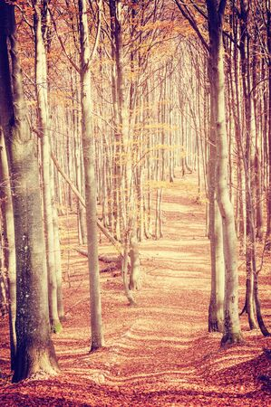 vintage landscape: Vintage landscape with road in autumn forest Stock Photo
