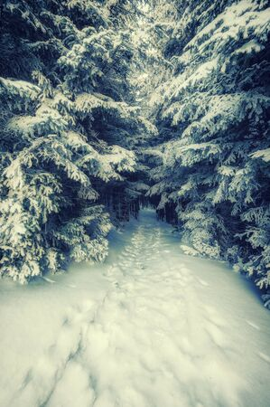 fairy  tail: Vintage landscape with footpath in snowbound forest, winter fairy tail