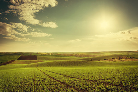 Agricultural landscape with green fields on hills and sun, vintage picture