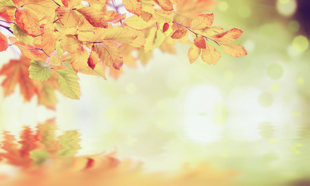 panoramic nature: Nature vintage autumn background with foliage for rustic design