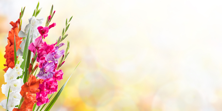 Beautiful floral nature background witn gladiolus for solemn day Фото со стока - 46045649