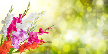 solemnity: Beautiful floral nature background witn gladiolus for solemn day