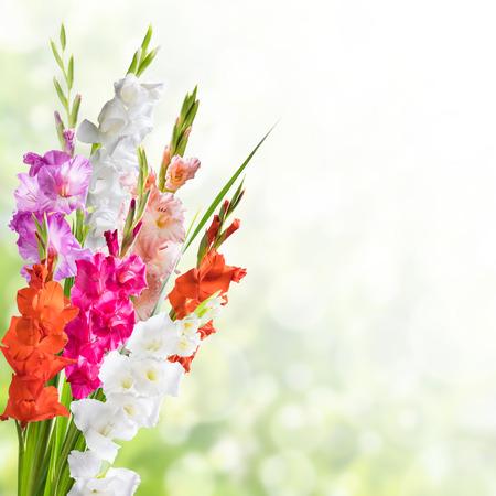厳粛な日に美しい花の自然背景予測に基づくグラジオラス 写真素材
