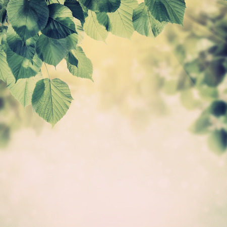 Vintage voorjaar achtergrond met mooie bloeiende boom takken Stockfoto