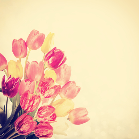tulip: Vintage spring background with tulip flowers