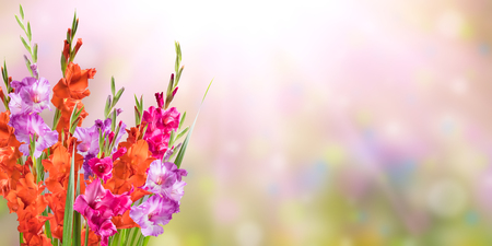 Holiday nature background with gladiolus flowers