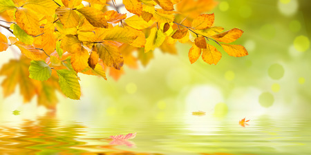 Amazing nature golden autumn background with leaves floating on water Фото со стока
