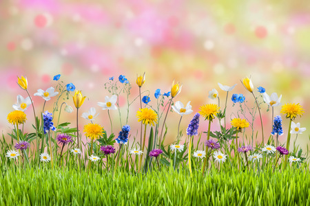 Spring meadow with beautiful flowers, nature background