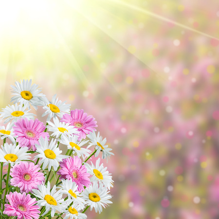 fragrant: Colorful spring background with fragrant flowers Stock Photo